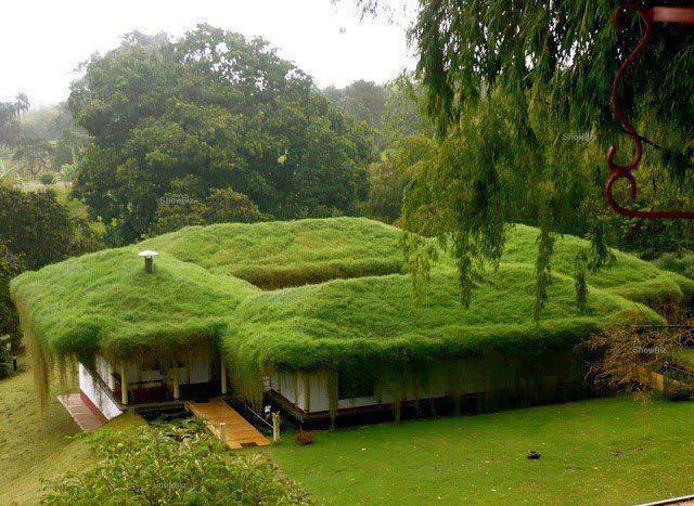 дом с плоской крышей, заросшей травой