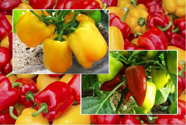 Удобрение для перцев