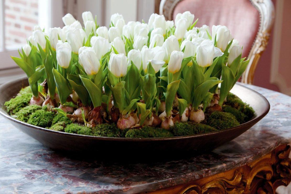тюльпаны на балконе