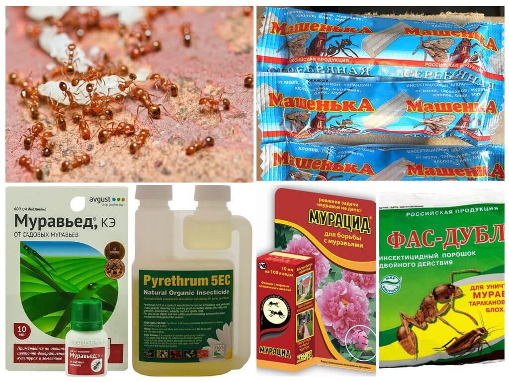 Химические препараты от муравьев