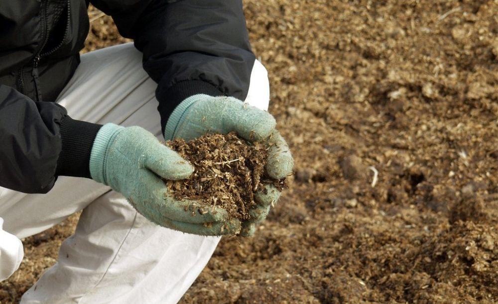 Виды удобрений – минеральные и органические