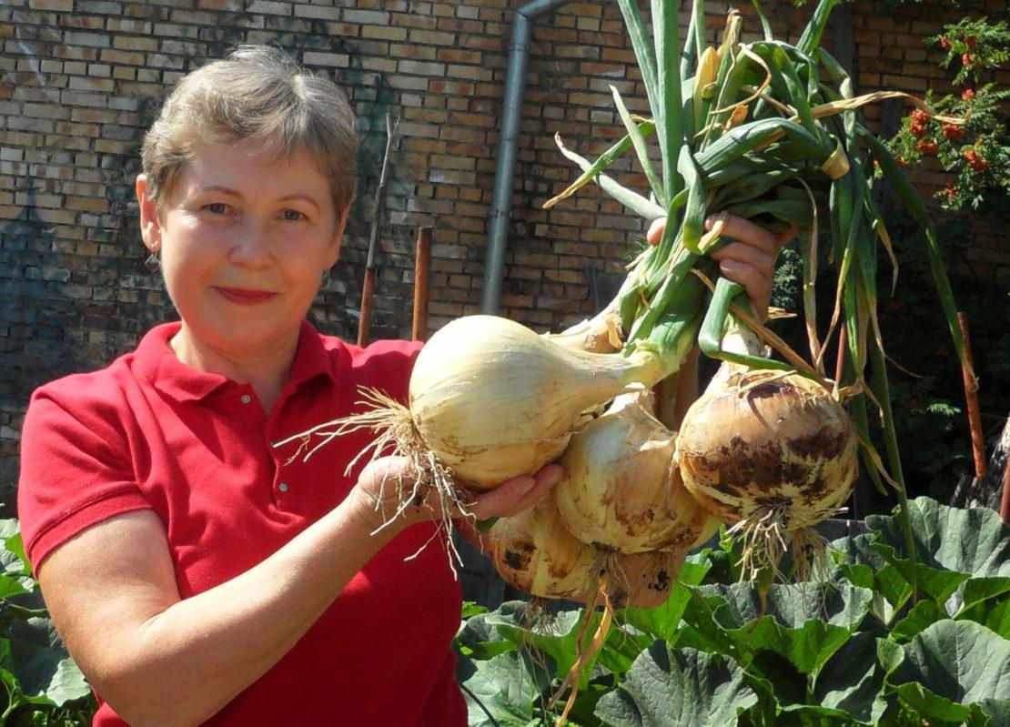 Выращивание крупного лука