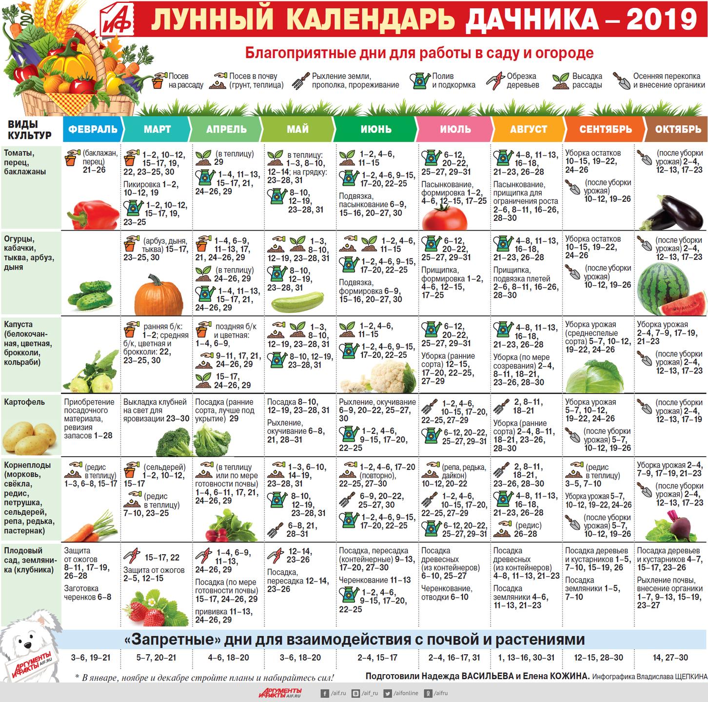 Посадка моркови по лунному календарю 2019