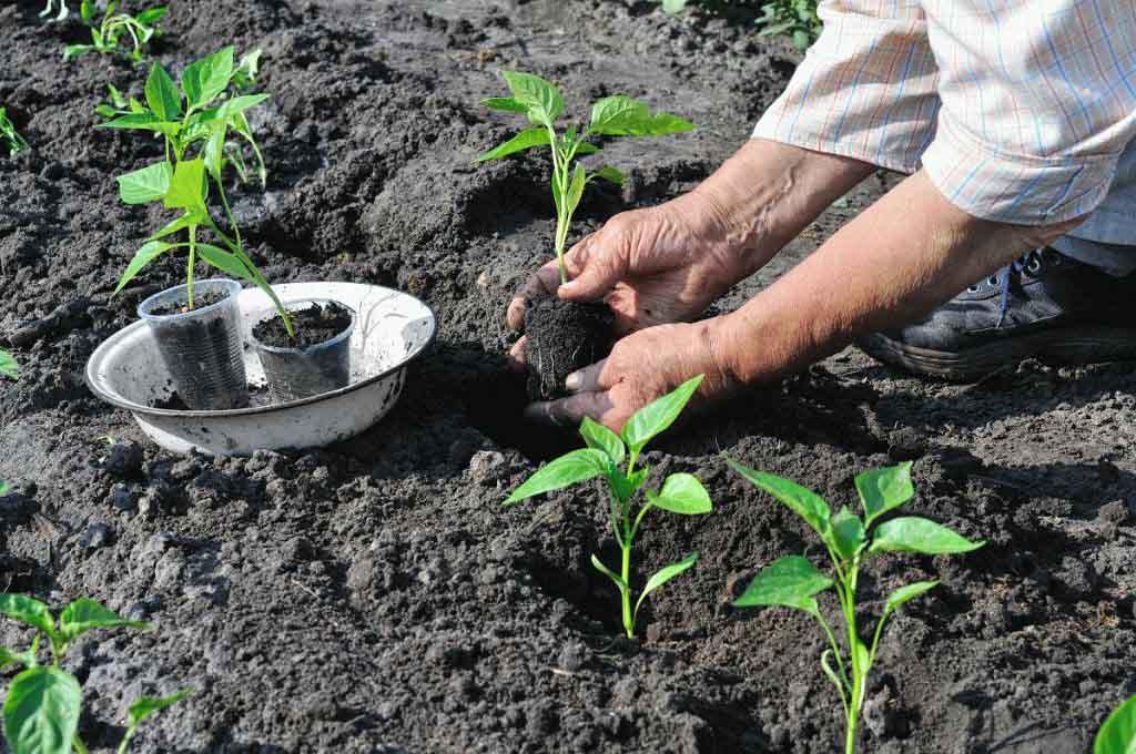 Общие требования для выращивания в теплице