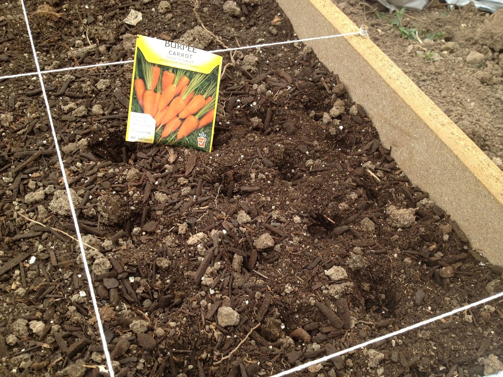 Подготовка семян моркови к посадке и обработка почвы