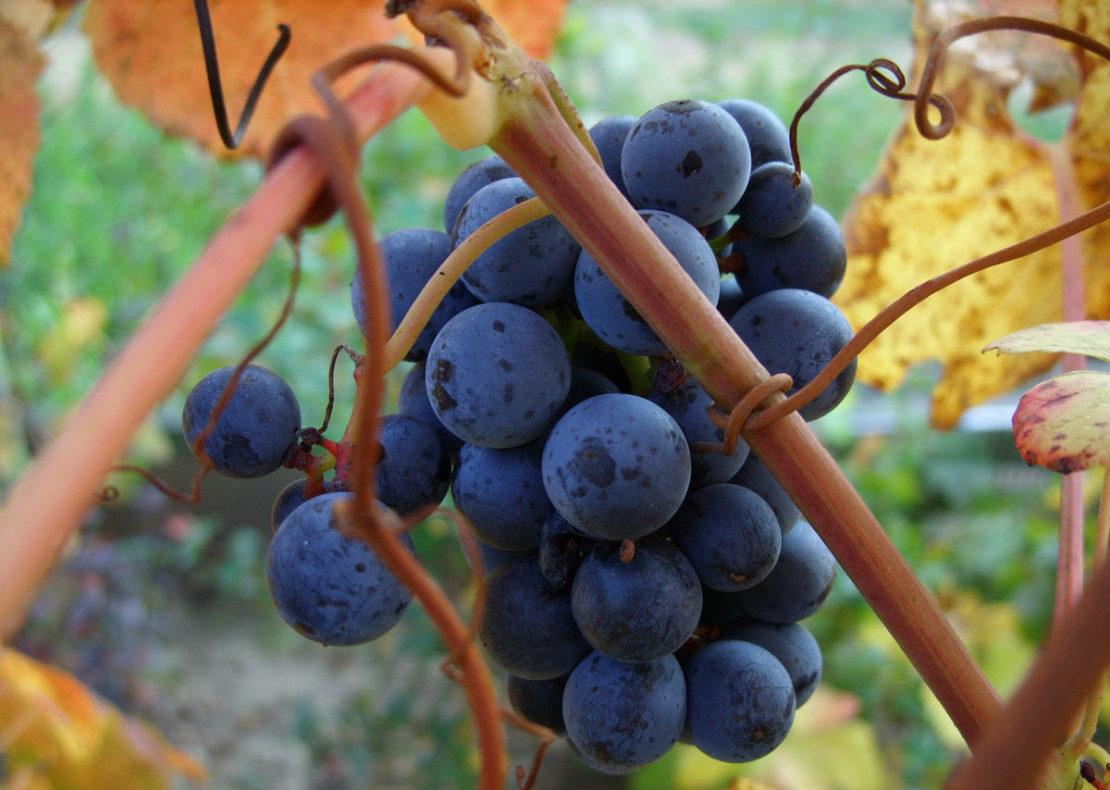 Сода для винограда и капусты