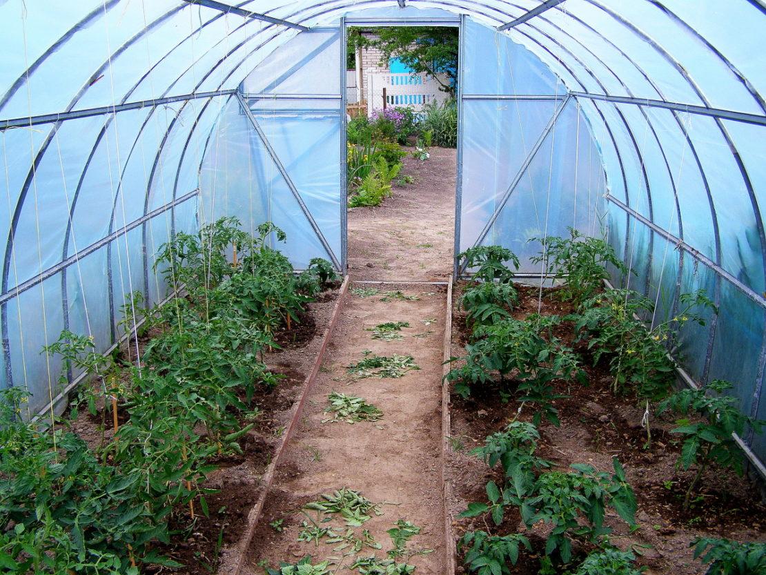 Как спасти томаты от жары