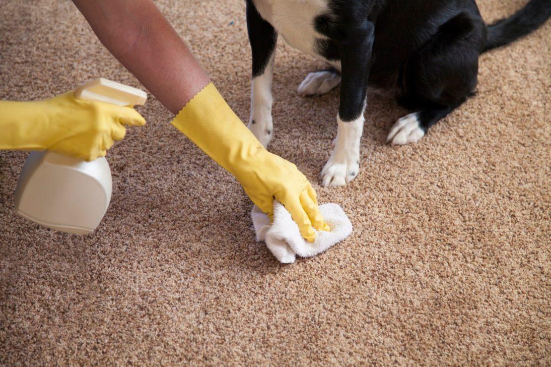 Как правильно почистить ковролин от пятен