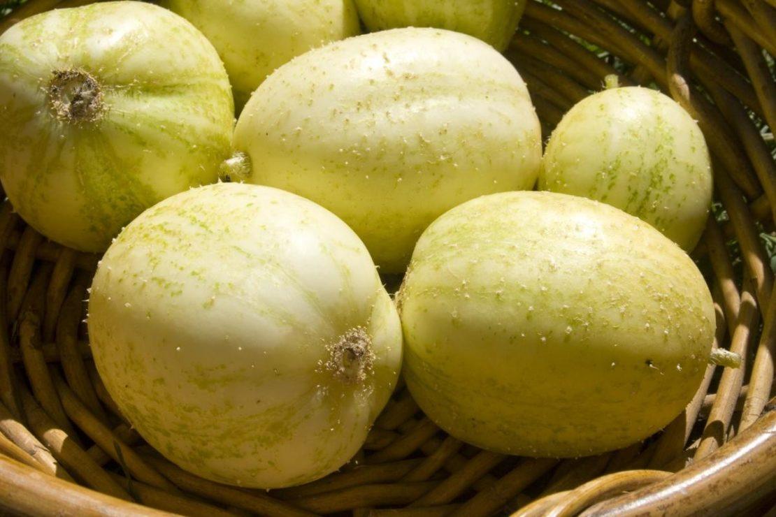 Что такое огурец-лимон и его особенности