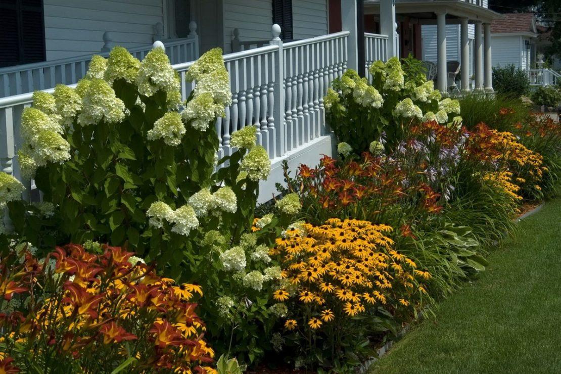 Цветущие растения для дачи