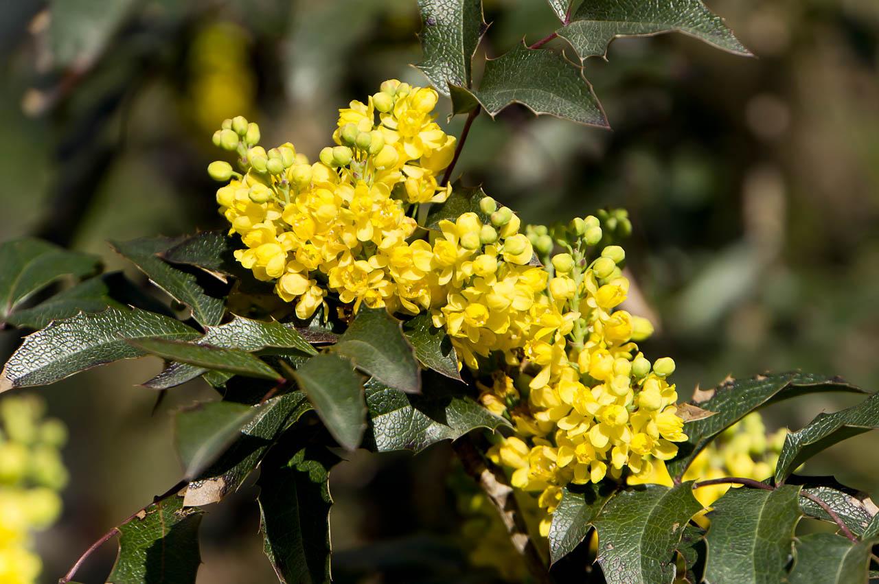 меня книги кустарник с желтыми цветами название и фото восхищает часть мифологии