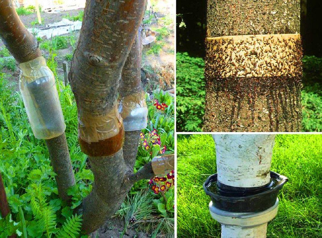 Разновидности ловчих поясов на дереве
