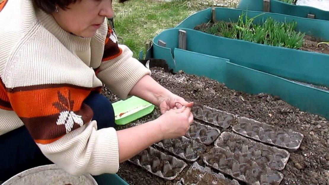 Посев моркови без прореживания разными способами