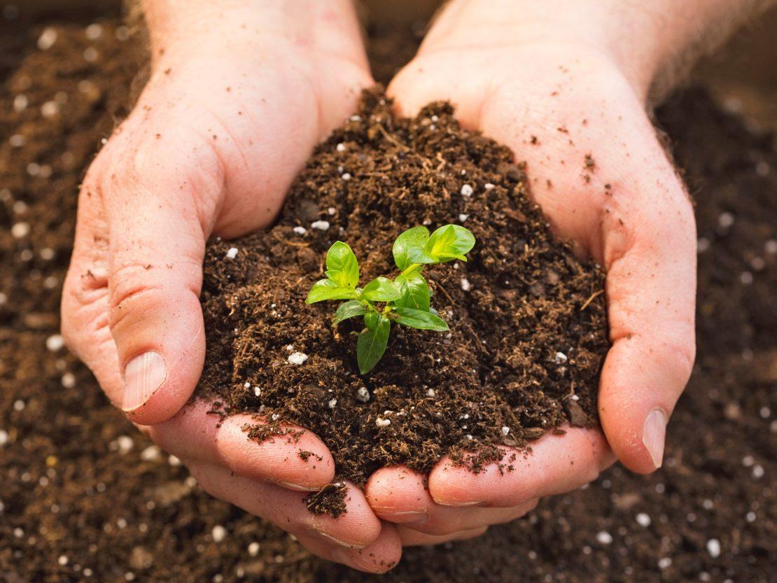 Как понизить кислотность почвы на дачном участке?