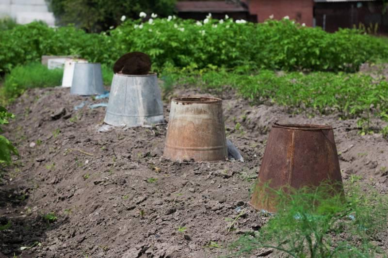 Защита для растений от заморозков
