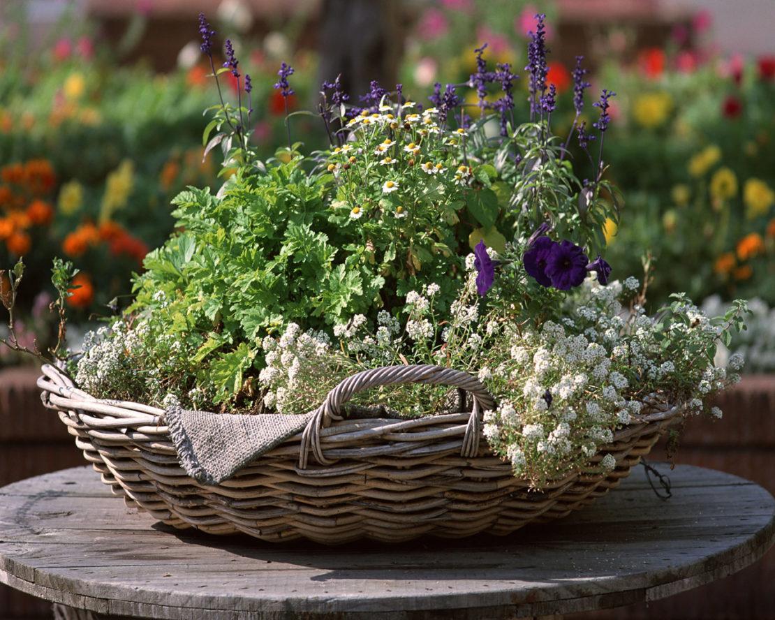 Лекарственные травы в корзине