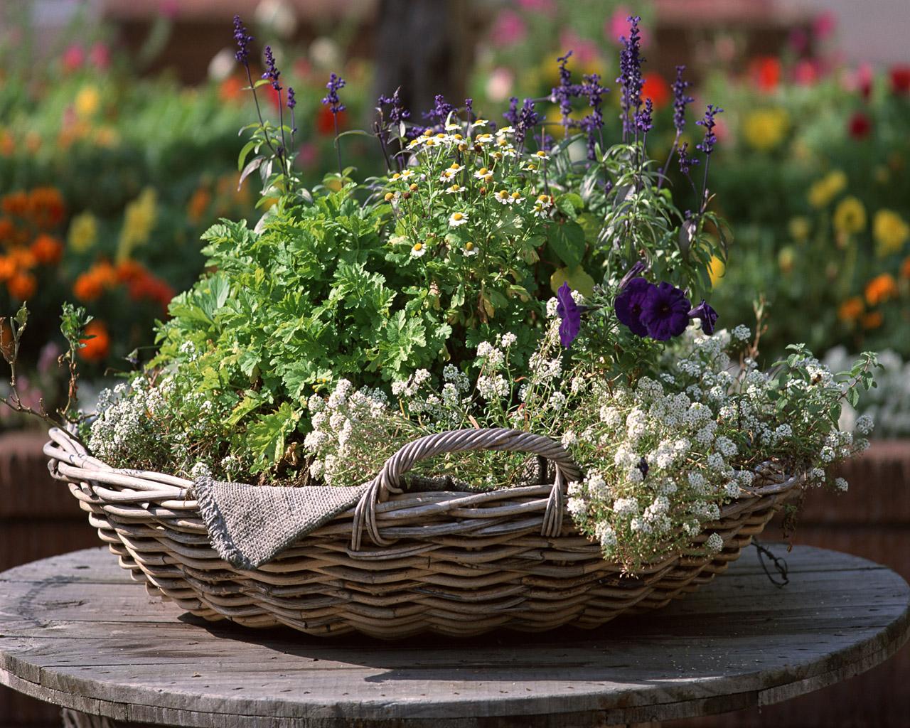 Сад лекарственных растений картинки