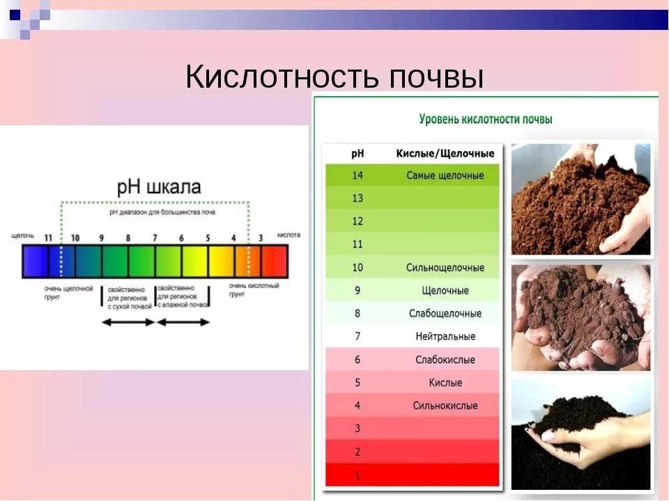 Причины закисления почвы