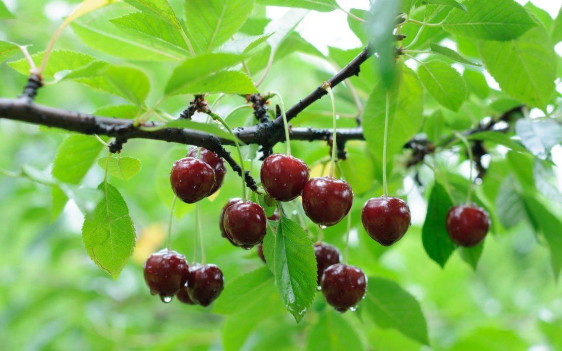 Ошибки начинающих садоводов и что нельзя делать с деревом