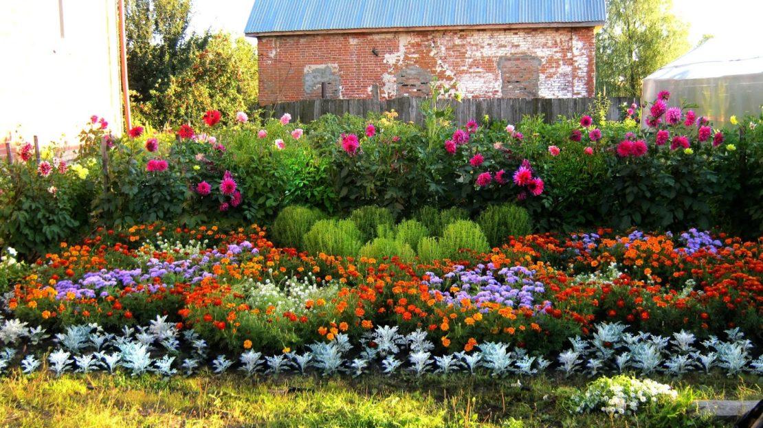 Цветы, которые высаживают в мае 2019
