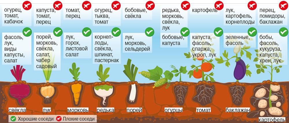 Что сажать с огурцами и томатами?