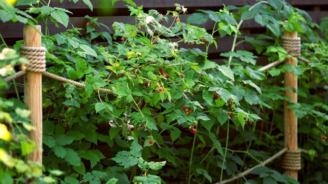 подпорки для плодовых кустарников