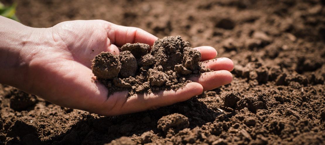 Признаки закисления почвы в огороде