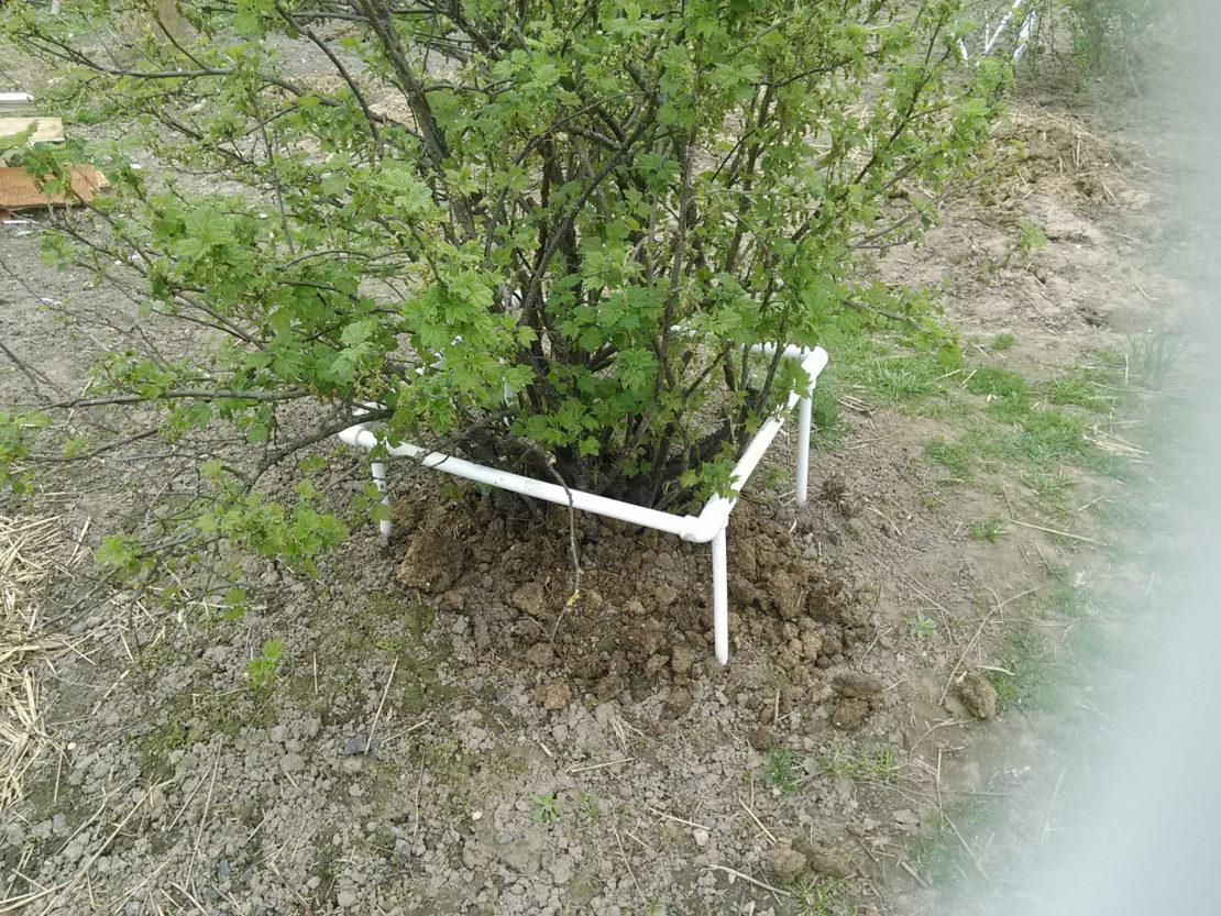 Подпорка для кустарника из ПВХ труб