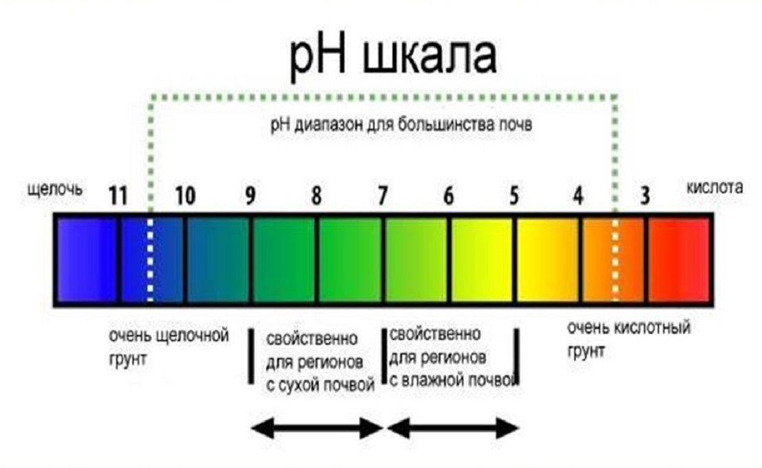 pH шкала грунта