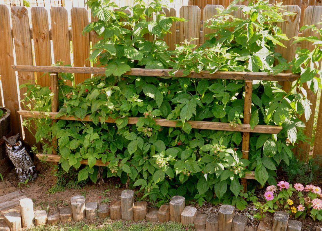 Подпорка для плодовых кустарников из дерева