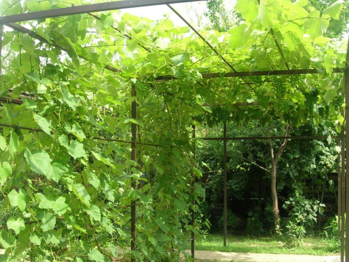 Как сделать навес для винограда своими руками