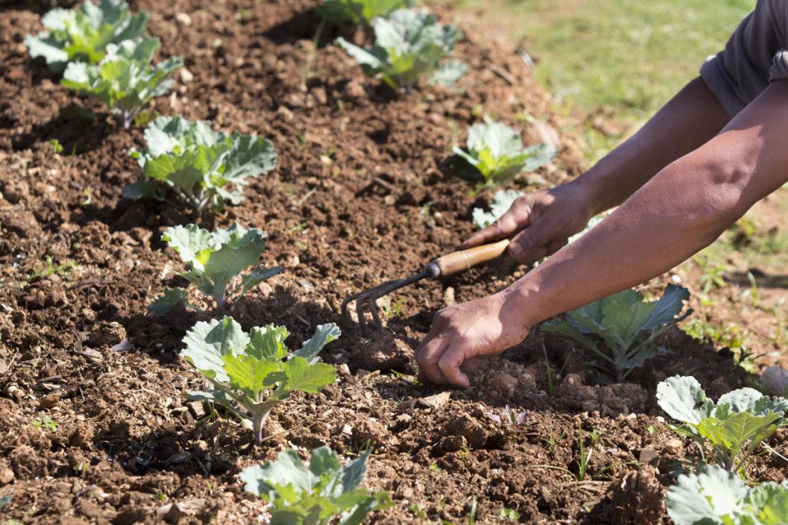 Ошибки, которые могут совершить даже опытные садоводы и огородники