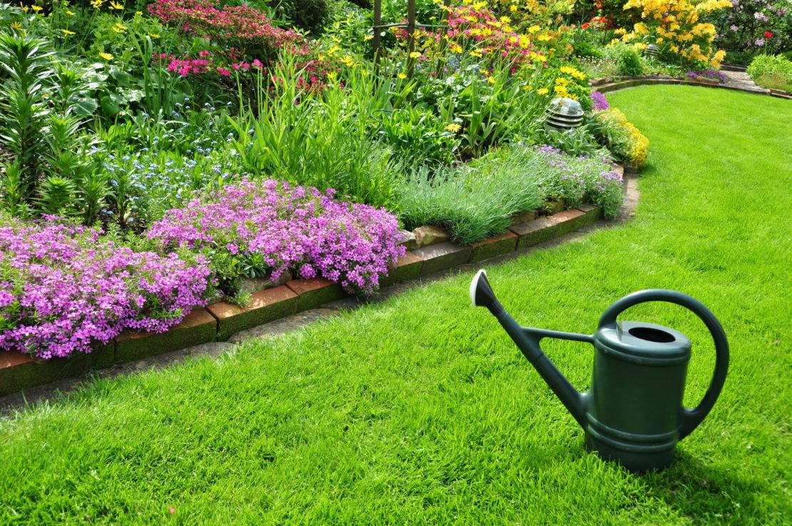 Как удобрять газон на даче
