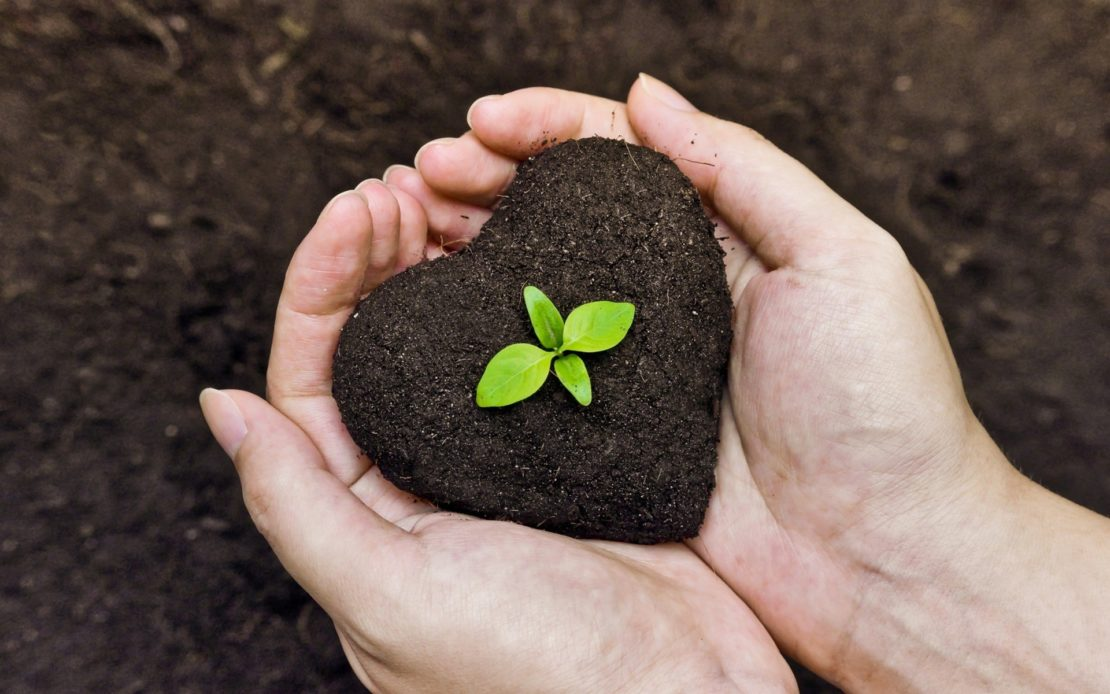 Как обеззаразить почву от грибка