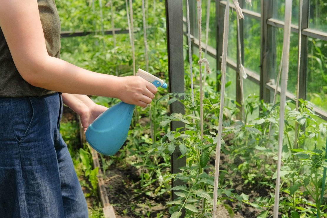 Обработка огорода фурацилином от фитофторы