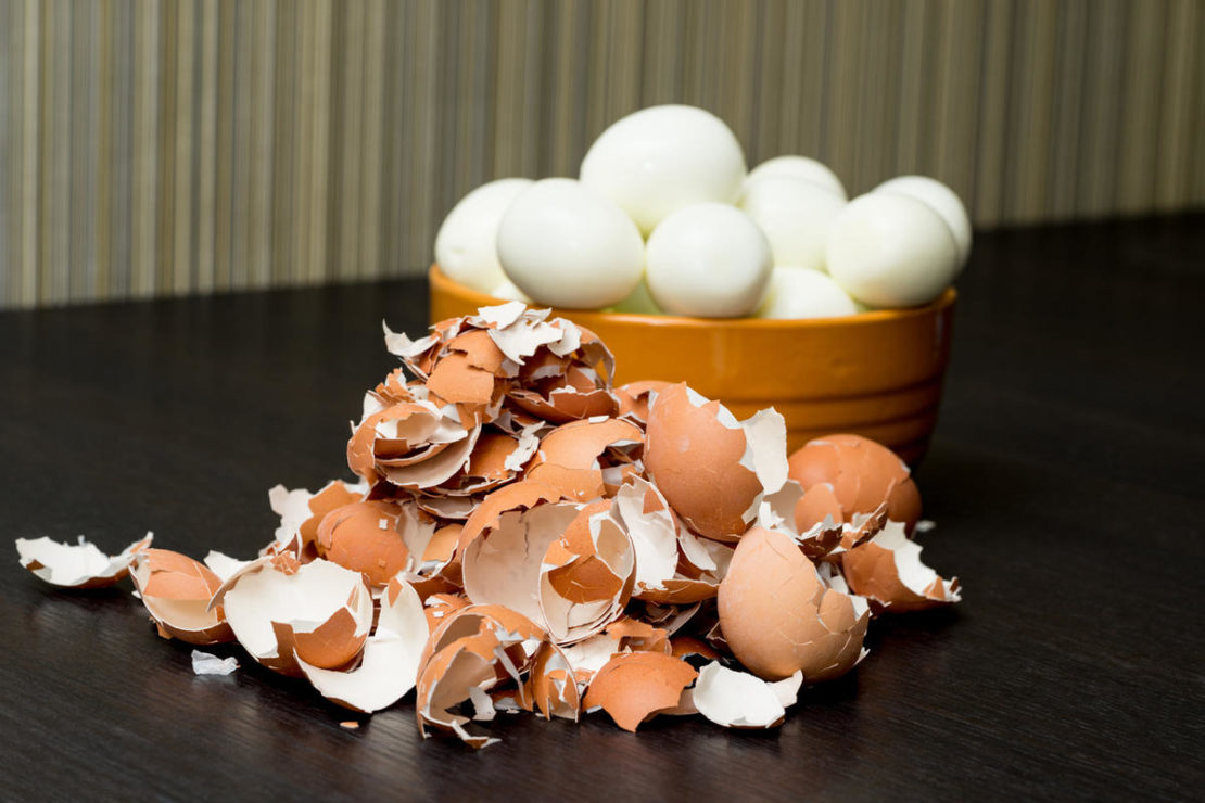 Эффективное применение яичной скорлупы на огороде