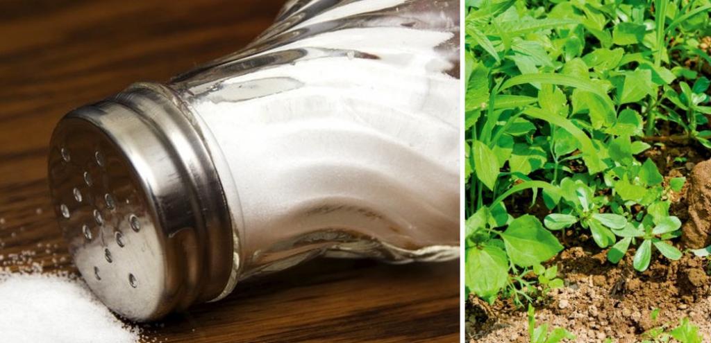 Необычное применение поваренной соли
