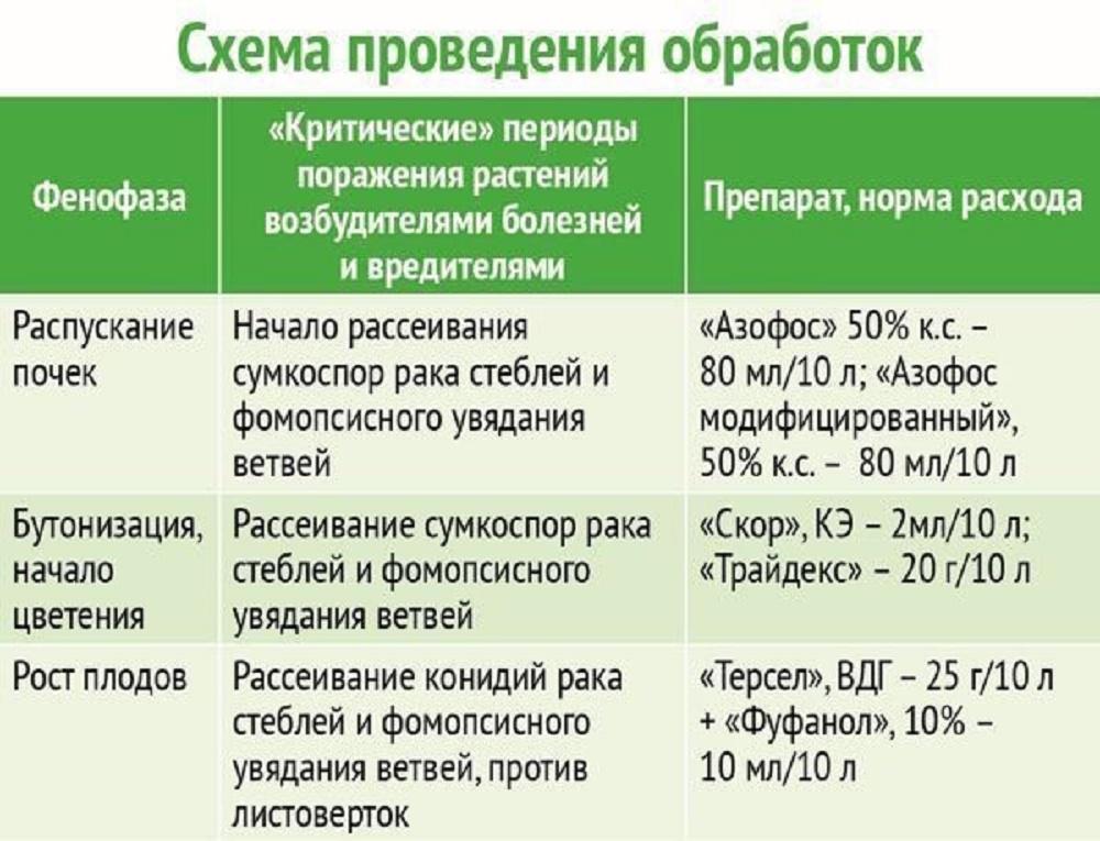 График проведения обработок от болезней голубики