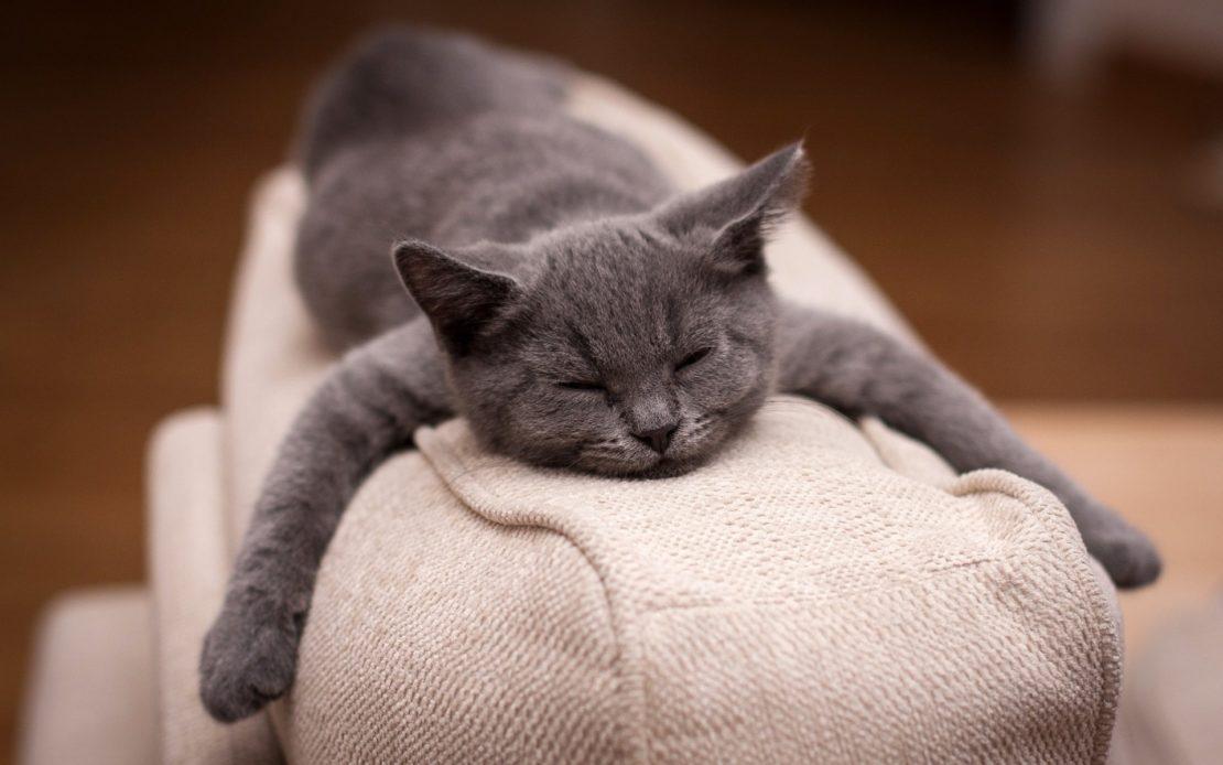 Как быстро избавиться от запаха кошачьей мочи в доме и квартире