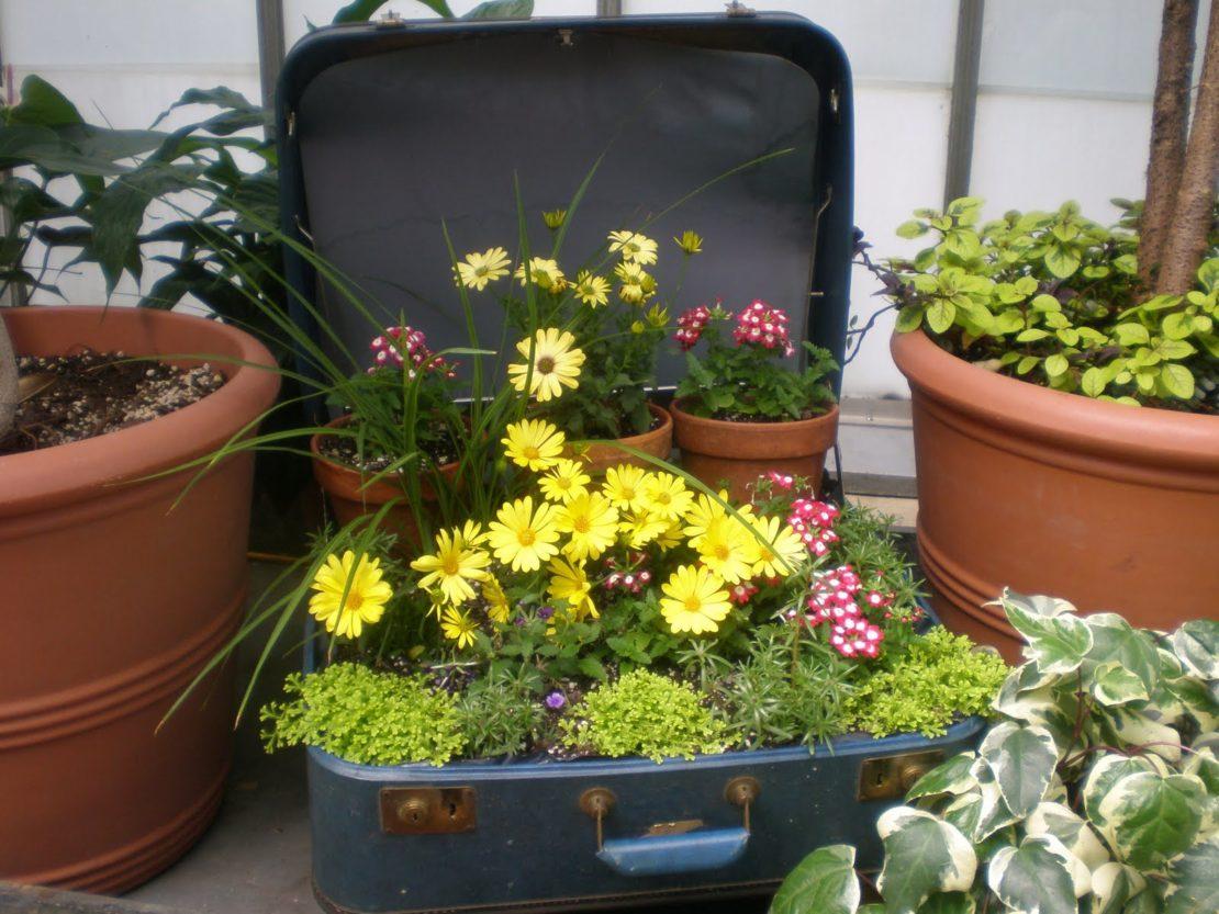 Клумба из чемодана или сундука