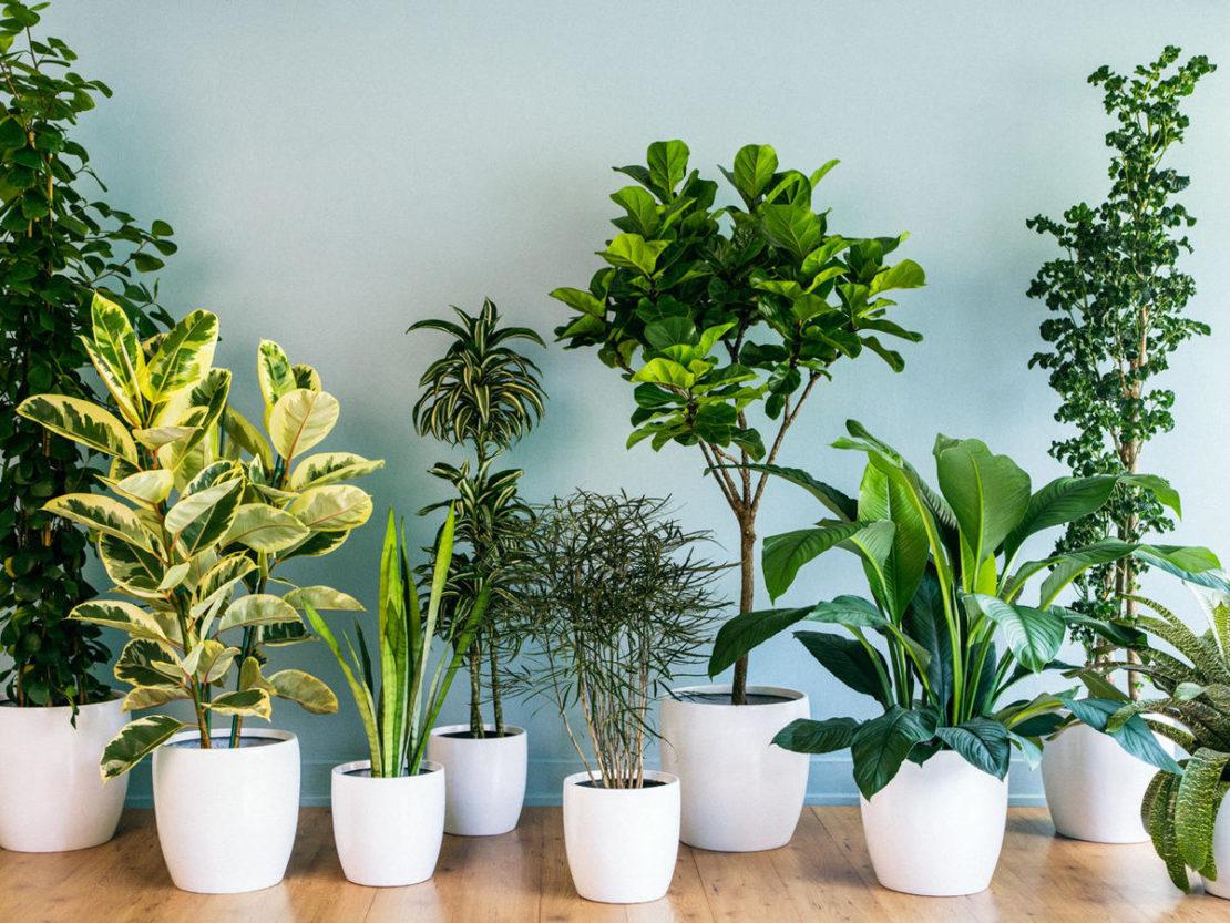 Растения оберегают дом