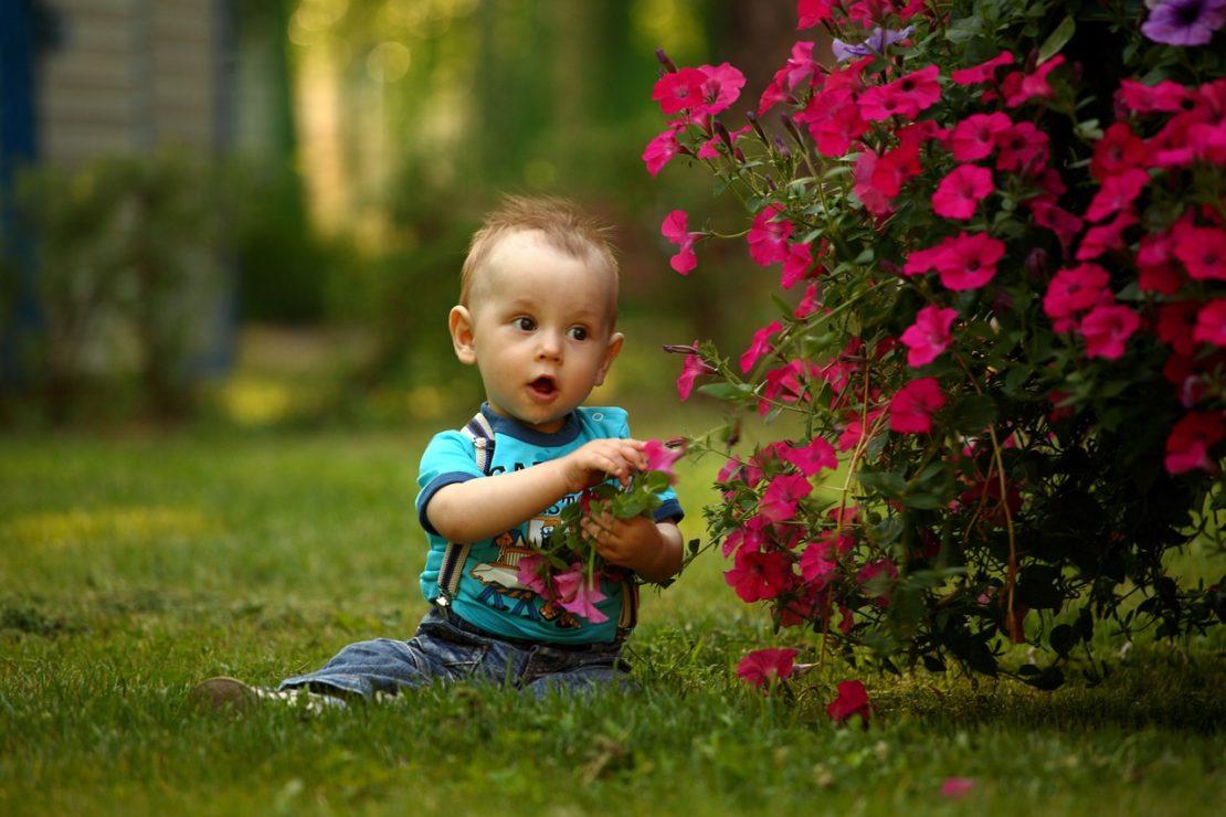 Ядовитые и опасные растения для детей