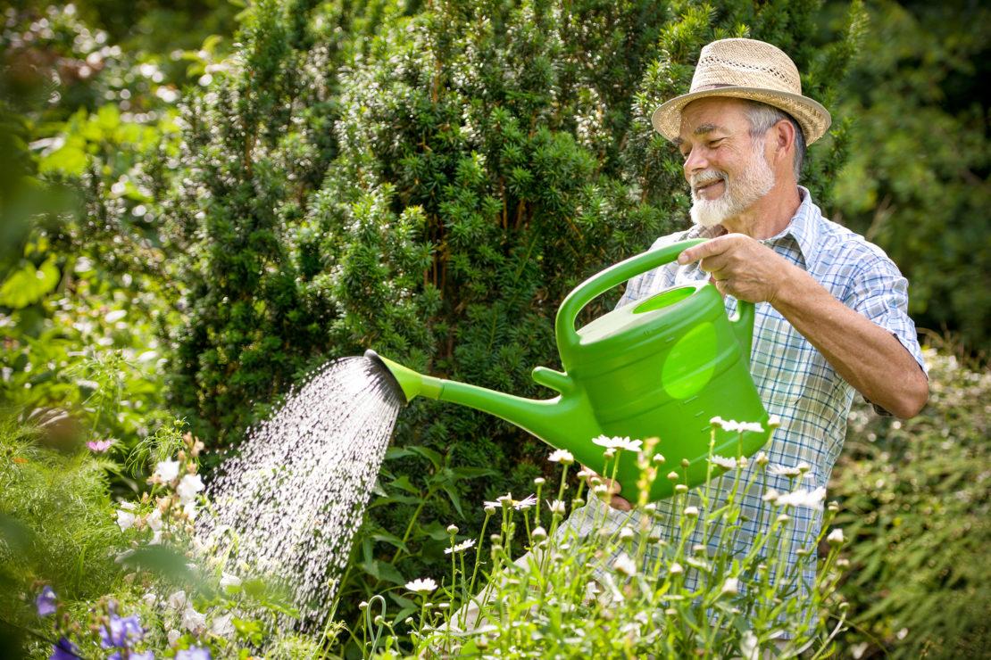 Полив растений на даче