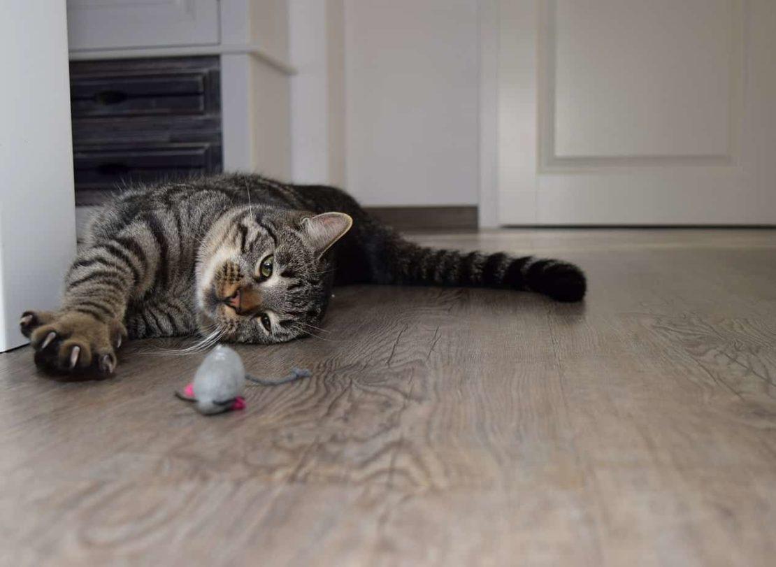 Как отучить кошку точить когти об обои и мебель