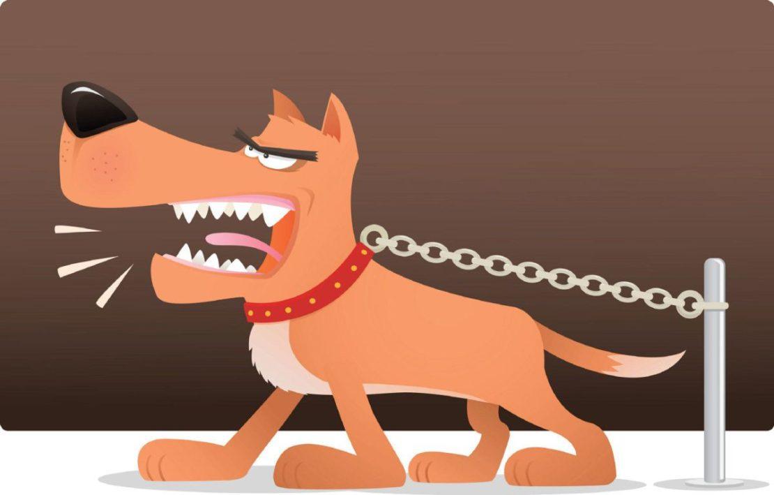 Причины, по которым опасно держать собак на цепи, и особенности содержания в своем доме