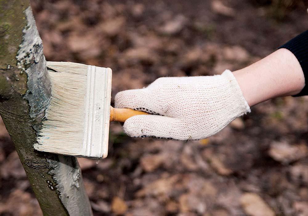 Подготовка дачного участка к зиме и главные шаги
