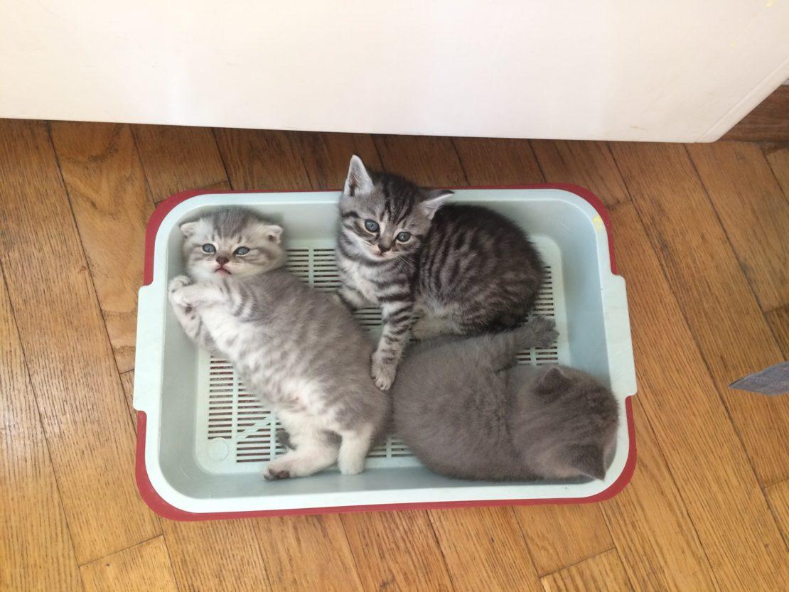 Пахнет кошачий лоток: как избавиться от запаха и средства для чистки