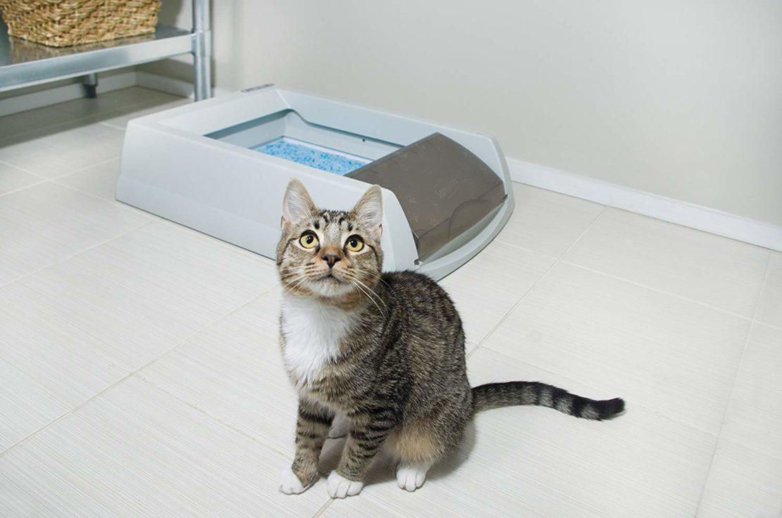 Почему кошки перестают пользоваться своим лотком