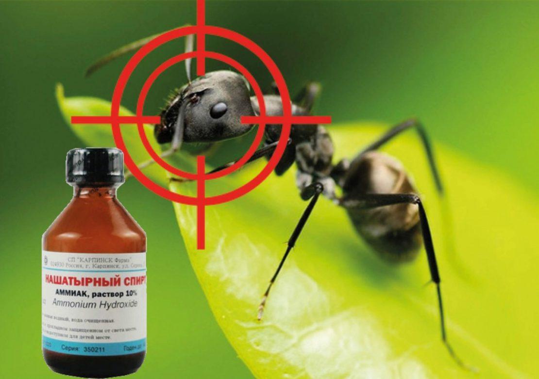 Нашатырный спирт от муравьев