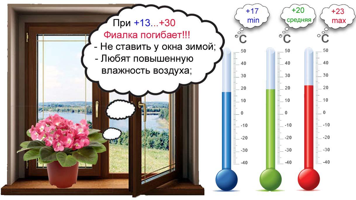 температура для фиалок
